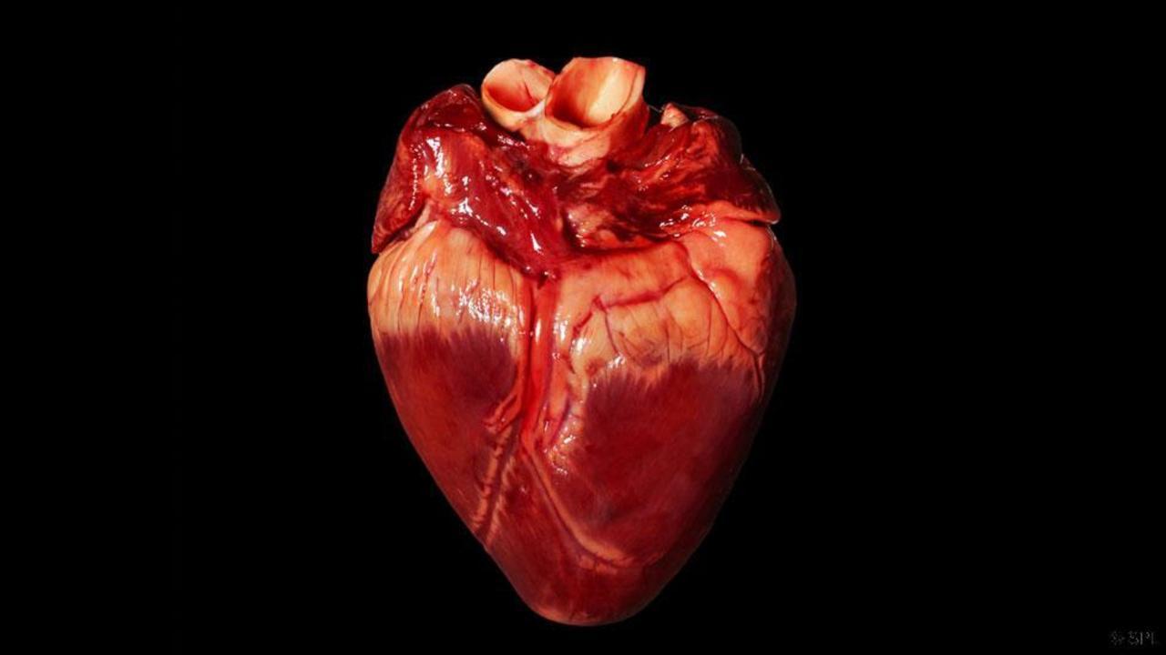 Cáncer de Corazón – tipos, Síntomas y tratamiento » Sintomas del Cancer