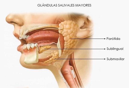 síntomas del cáncer de glándulas salivales